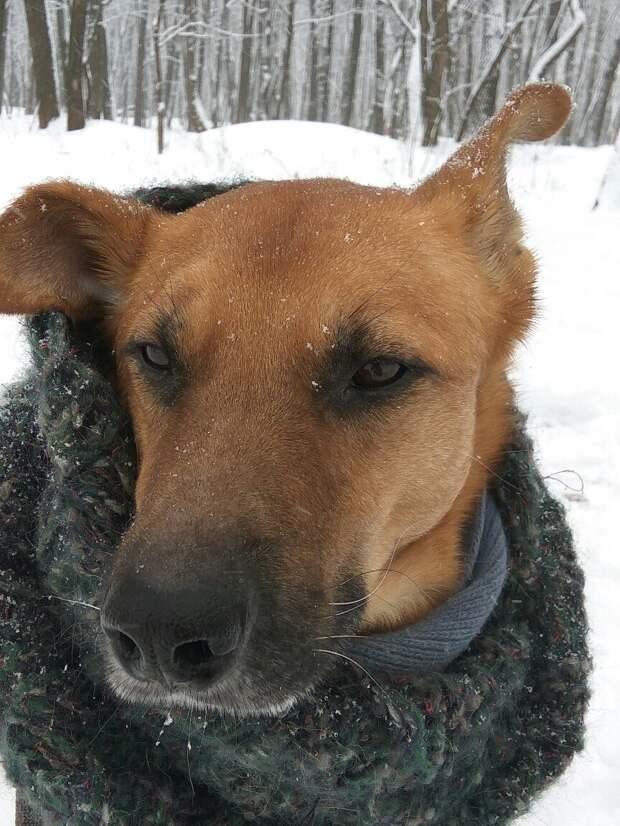 На бездомного щенка натравили двух питбулей. Он чудом уцелел, а добрые люди не дали ему умереть на улице