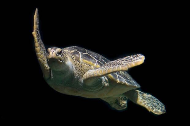 10 видов животных, находящихся под максимальной угрозой исчезновения