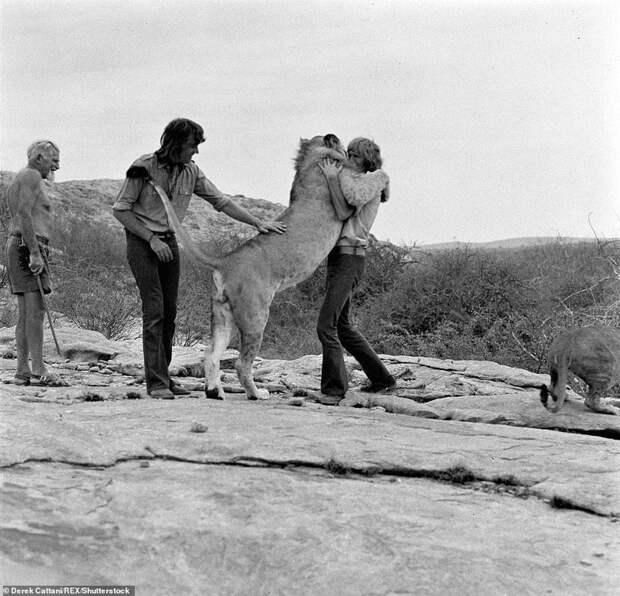 Встреча верных друзей Кристиан, возвращение животных, домашний любимец, животные и люди, история любви, лев, реабилитация, спасение львенка