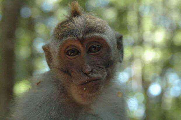 10 животных, которые будут доминировать на Земле, если мы вымрем