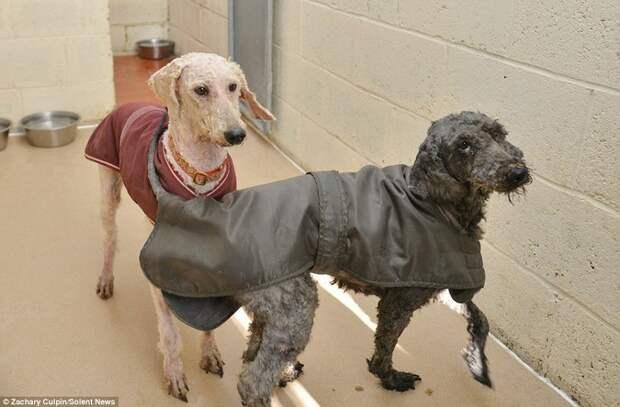 Преображение бродячих собак