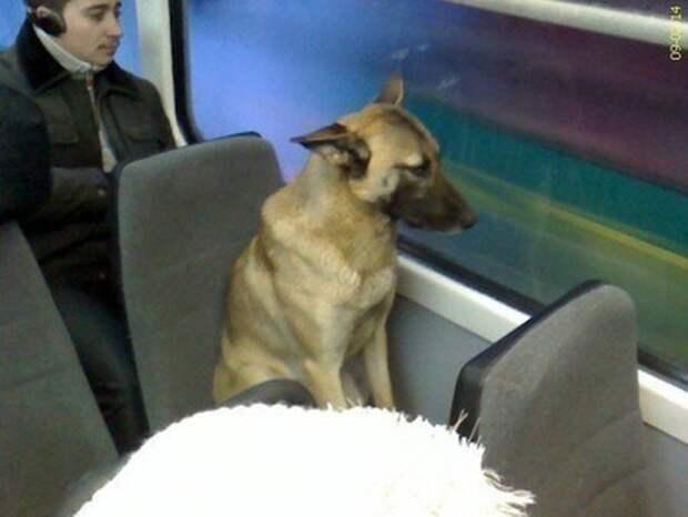 Постоянный пассажир