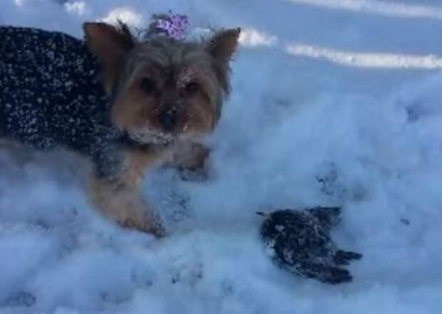Благодаря собаке и сообразительности девушки, спасена маленькая жизнь!