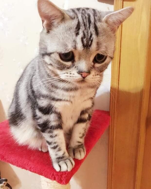 В Китае обнаружена самая грустная кошка в мире