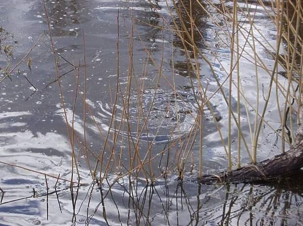 Ловля в половодной речке