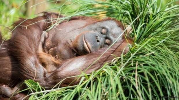 20 биохаков для улучшения сна (и здоровья)