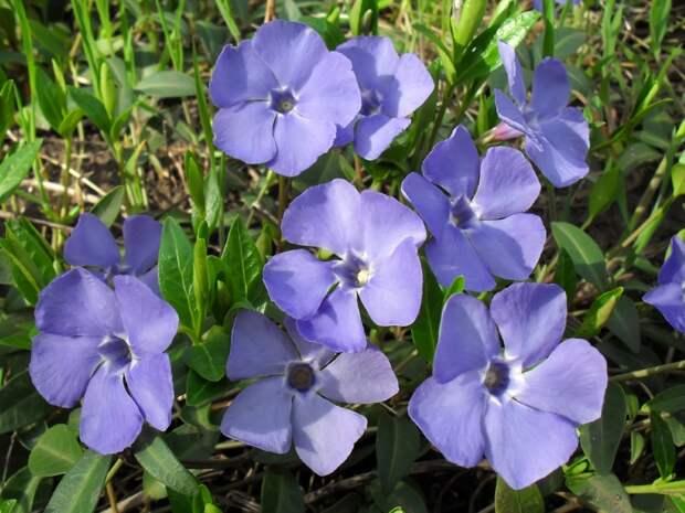 цветы для посадки на кладбище