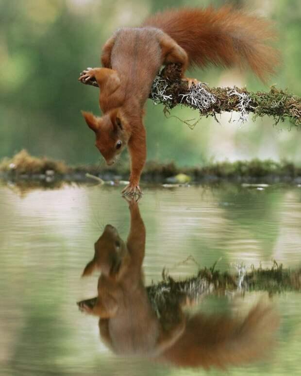 Как ведут себя дикие животные, когда не видят, что за ними наблюдают (20 фото)