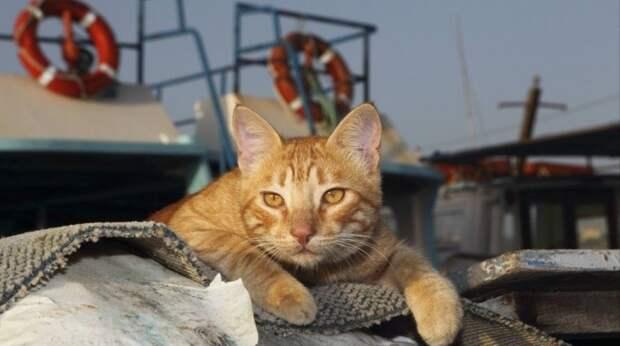 Кошка 3 недели питалась только конфетами, пока ехала из Украины в Израиль