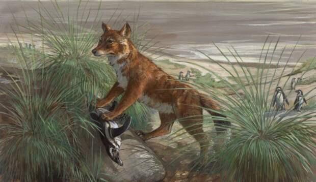 19. Фолклендская лисица вымерли, животные, история, человек