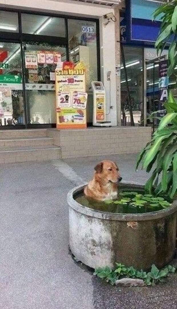 Когда на улице дичайшая жара