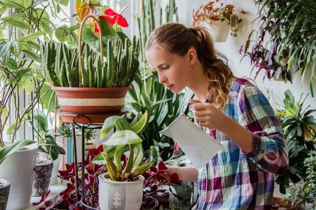 Способы избавления от мошек в цветочных горшках