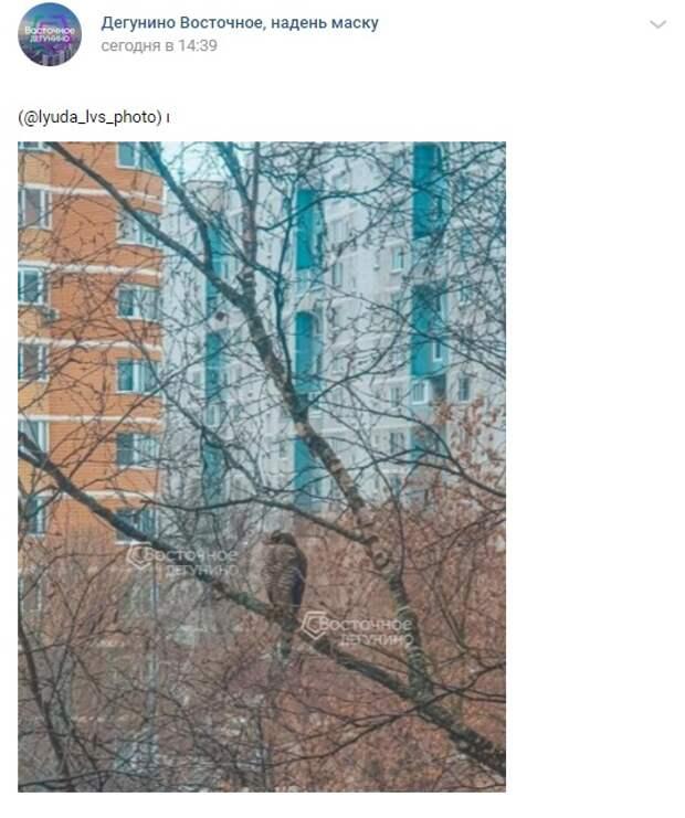 Фото дня: на Дубнинской завелся кречет