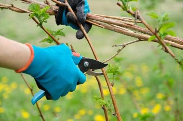 Как обрезать плодовые деревья – все о видах крон и их формировании (в cхемах)
