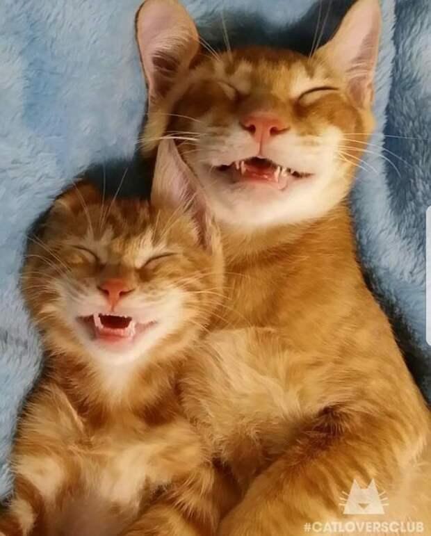 17 милых котов, которые спят где и как придется