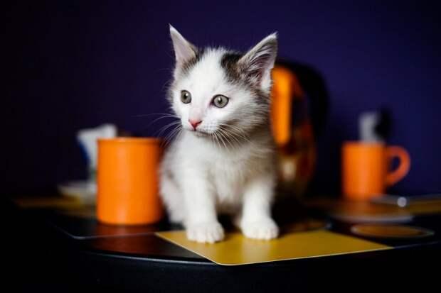Двух новорожденных котят обернули тряпкой и выкинули в подъезд история, котенок, котята, кошка, подъезд
