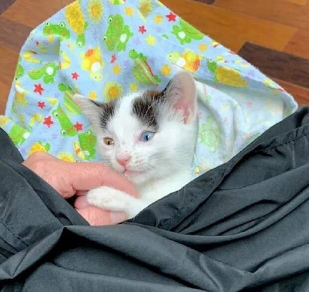 Котенок в конверте