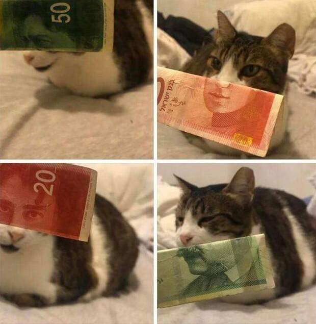 Кот с лицом с денежной купюры