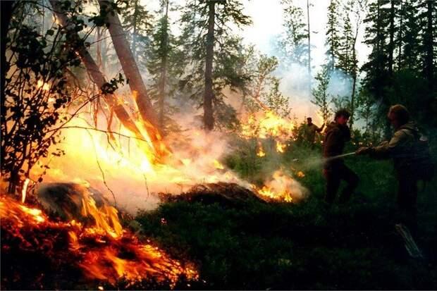 Путин назвал причину лесных пожаров и паводков в стране