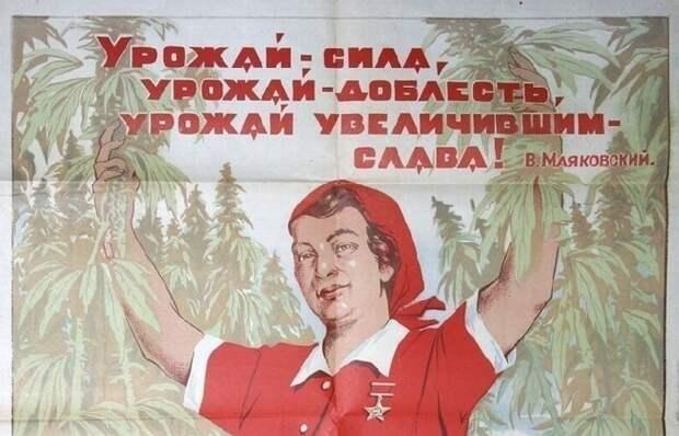 Как Российская империя и СССР получали сверхдоходы от производства конопли