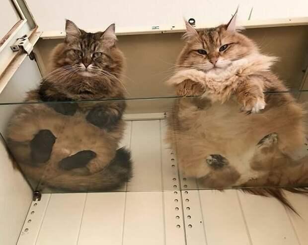 Если у вас есть кошка - купите стеклянный стол