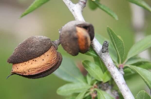 Популярные орехи, которые лучше навсегда забыть