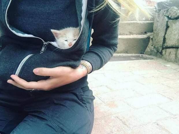 Девушка спасла котенка во время поездки в Перу и забрала его с собой в США