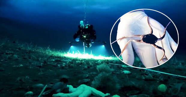 Подо льдами Антарктиды обнаружены неизвестные науке существа
