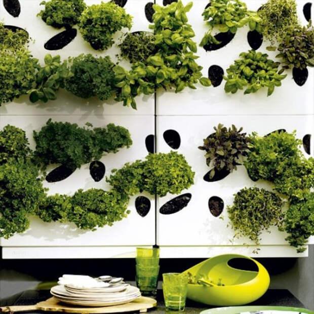 herb-garden-inspirations4-500x500 (500x500, 306Kb)