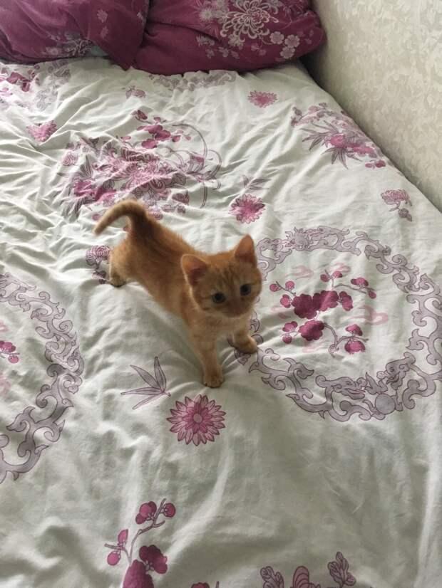 котёнок на кровати