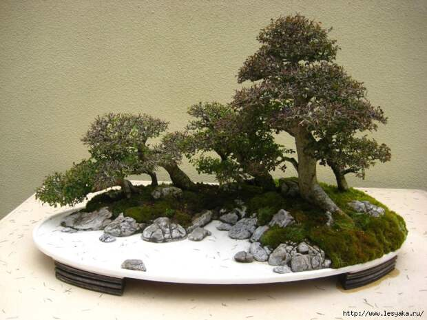 3925073_bonsai114457 (700x525, 320Kb)