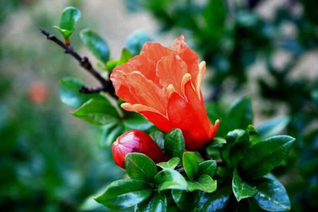 Маракуйя, лимоны, инжир идругие фрукты, которые можно вырастить усебя вквартире или наработе