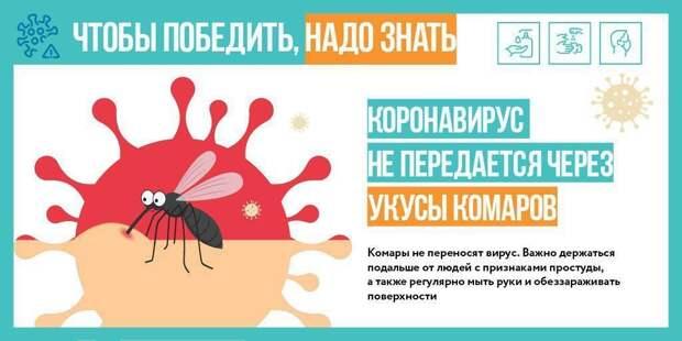 Комары не распространяют COVID-19