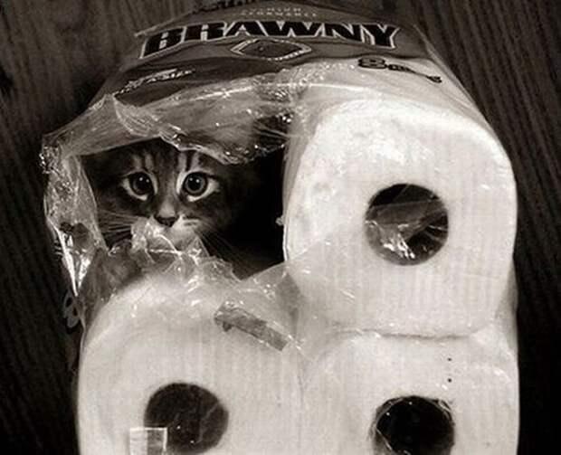 hidingcats11