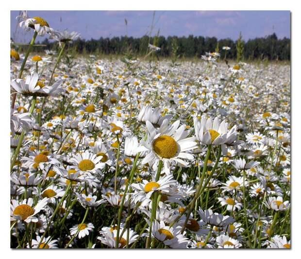 http://img-2005-11.photosight.ru/28/1152484.jpg