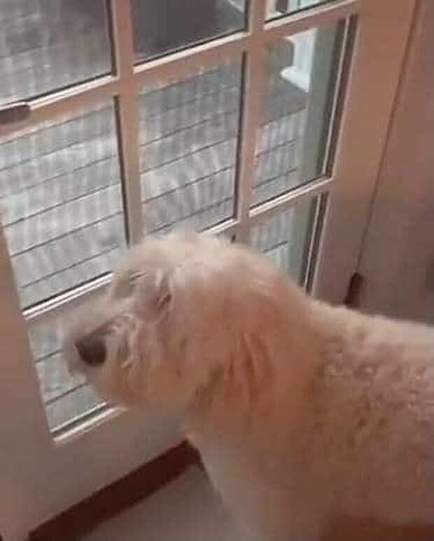 Койот завороженно смотрел на игрушки, раскиданные во дворе, а потом решил поиграть с ними на глазах у собаки