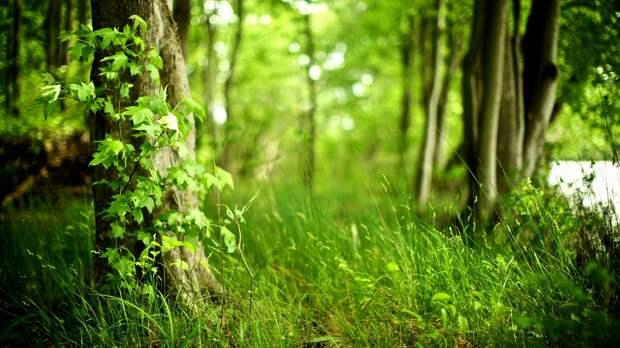 По лесу слухи ходят, будто ты в вегетарианцы подался