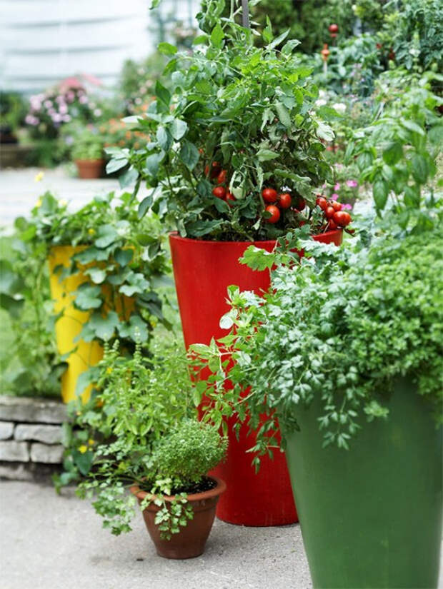 herb-garden-inspirations2-500x666 (500x666, 380Kb)