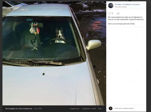Фото дня: в Алтуфьеве замечен четвероногий шофёр