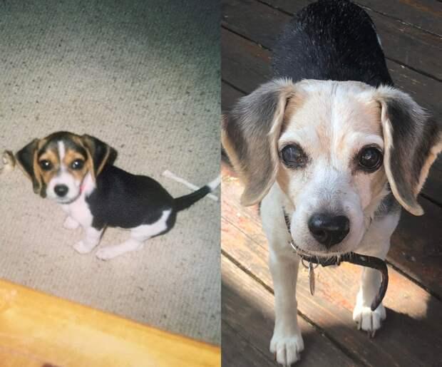 Собаки, которым посчастливилось попасть к хорошим хозяевам