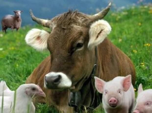"""Картинки по запросу """"увеличилось производство продукции животноводства"""""""