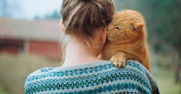 Против каких болезней вам может помочь обычная кошка?