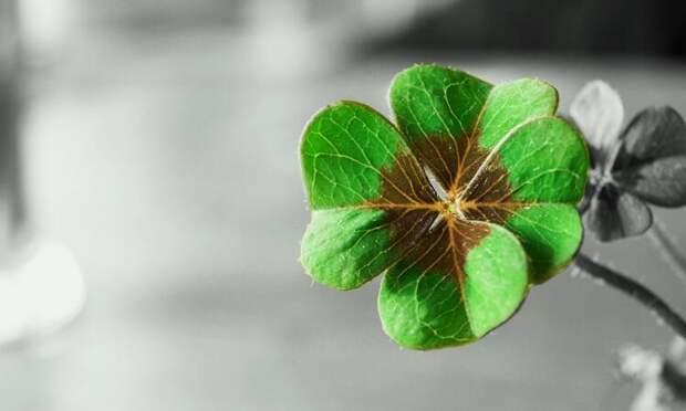 Знаки удачи или признаки перемен к лучшему