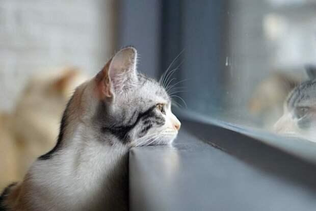 скучают ли кошки по хозяину (фото Яндекс.Картинки)