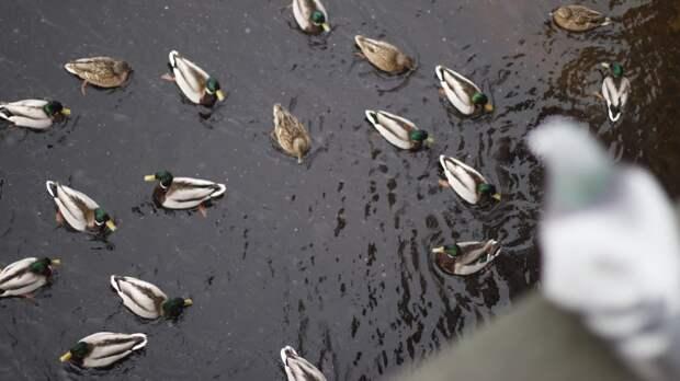 Фото с трупами птиц стало поводом для приостановки членства депутата в ЕР