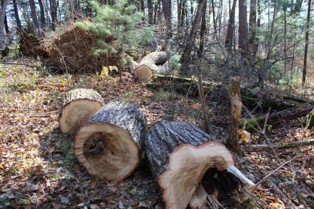 Россиянам рассказали, как они сами могут восстановить сгоревший лес
