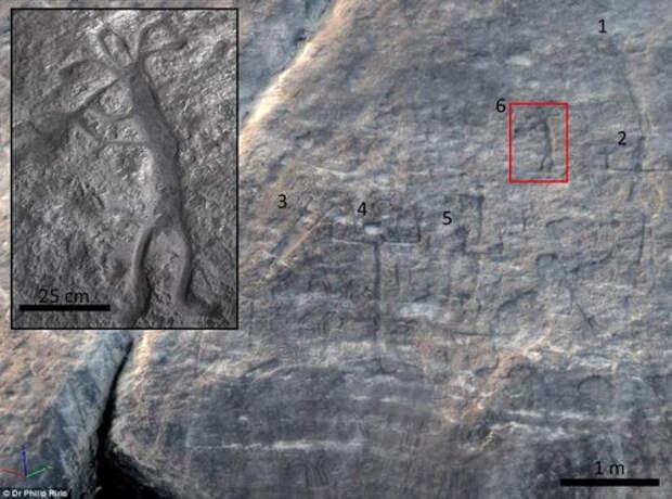 В Венесуэле нашли древние петроглифы