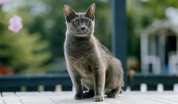 Домашнюю кошечку впервые взяли на дачу и она пропала, 5 дней искали…