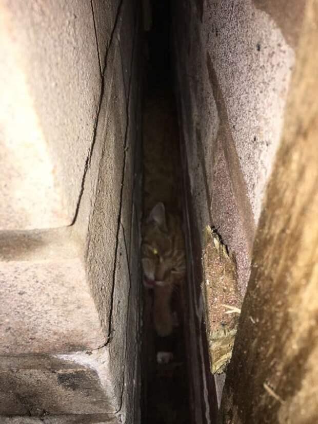 Котик застрял в очень узком проеме, но сумел позвать людей на помощь!