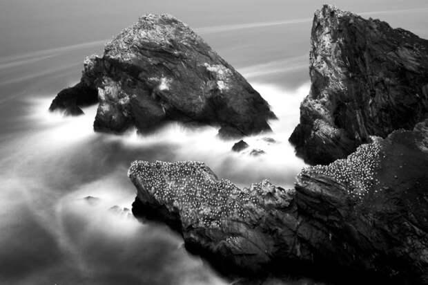 Как олуши ловят рыбу у берегов Шетландских островов